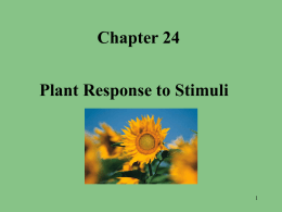 Responses in the Flowering Plant Powerpoint