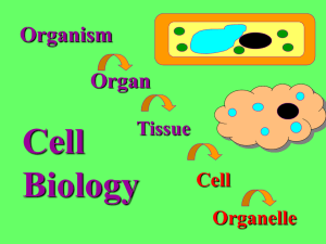 Cell Organelle ppt