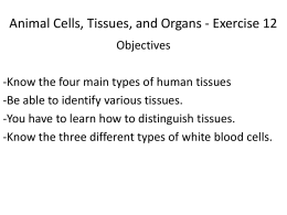 Animal Cells, Tissues, and Organs