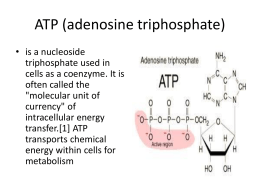 ib chapter 5 multiple choice Advanced a level chemistry revision quizzes and worksheets  a level multiple  part 5 aldehydes and ketones multiple choice on  gce a as a2 ib.