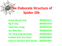The Elaborate Structure of Spider Silk