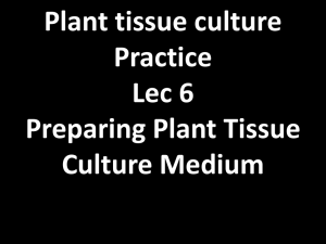 Preparing Plant Tissue Culture Medium Micronutrients