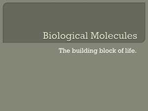 Biological Molecules - Fall River Public Schools
