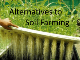 soilless farming - Science at NESS