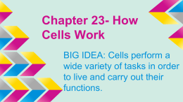 Chapter 23- How Cells Work
