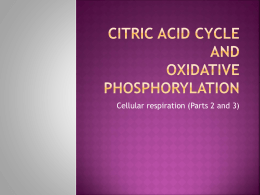Citric Acid Cycle and Ox. Phosphorylyation