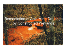 Remediation of Acid Mine Drainage by Constructed Wetlands