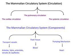 The Circulatory System (PowerPoint)