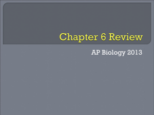 File - Biology with Radjewski