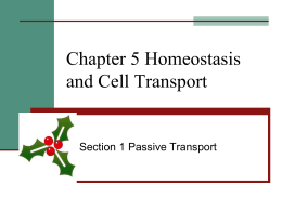 Chapter 5 Homeostasis and Cell Transport