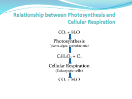 the relationship between cell respiration and photosynthesis notes
