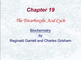 The Chemical Logic of TCA cycle