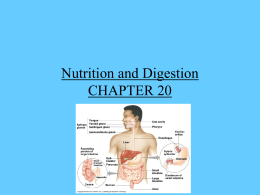 digestive_systems