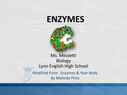 Enzymes PPT - bulldog biology
