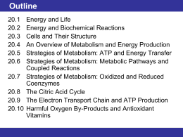 20.5 Strategies of Metabolism: ATP and Energy Transfer