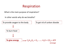 The Respiratory System (PowerPoint)