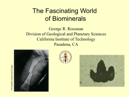 Biominerals00 - California Institute of Technology