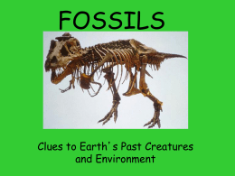 FOSSILS-2