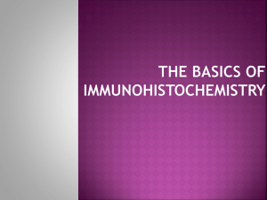 The basics of immunohistochemistry principle