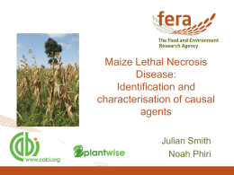 Maize Lethal Necrosis Disease:Identification and