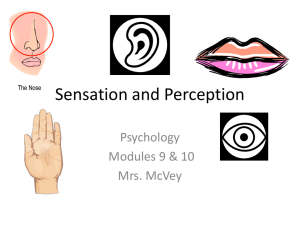 Sensation and Perception - Mrs. McVey Social Studies