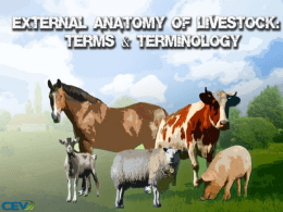 Directioal and External Anatomy of Livestock