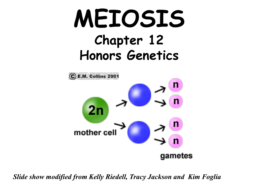 Meiosis - TeacherWeb