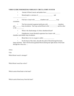 Worksheet: Circulatory System