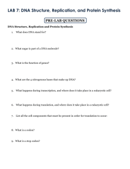 Printables Dna Worksheet chapter 13 lab from dna to protein synthesis worksheet intrepidpath answer key part c intrepidpath