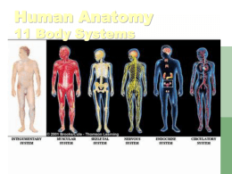 Human Anatomy 11 Body Systems