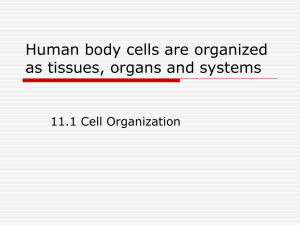 Human body cells are organized as tissues, organs and systems