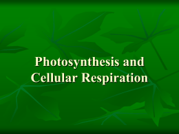 Photosynthesis and Cell Respiration Notes