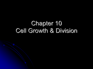 Chapter 10 Cell Growth, Mitosis