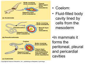 5/1/13 Phylum Platyhelminthes (Flatworms)
