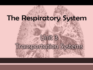 Respiratory Power Point