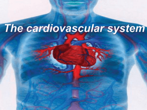 Function of the cardiovascular system