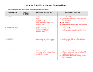 Chapter 3: Cell Structure and Function Notes