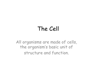 cell organelles power point