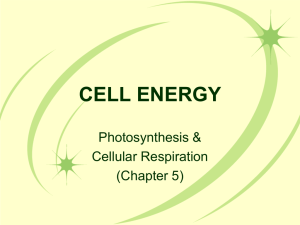 CELL ENERGY - WordPress.com