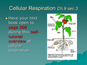 Ch. 7 Cellular Respiration