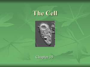 The Cell - myndrs.com