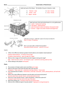 Plant test study guide answers