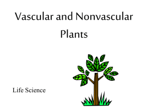 Vascular and Nonvascular Plants