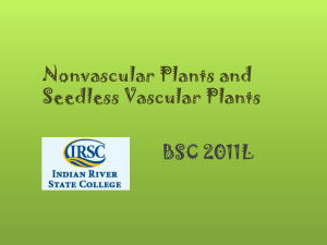 Nonvascular Plants and Seedless Vascular Plants