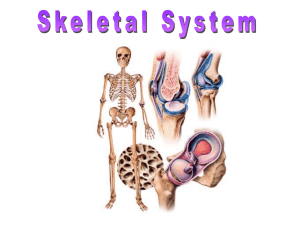 The Skeletal System - HRSBSTAFF Home Page