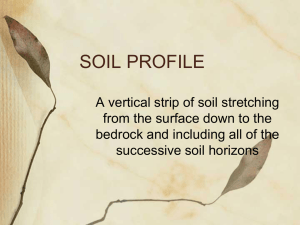 soil profile