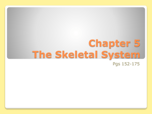 Chapter 5 Homeostatic Imbalances The Skeletal System