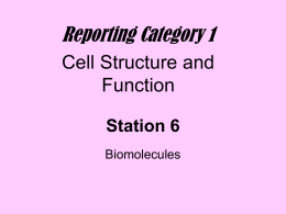 Station 6 - Biomolecules