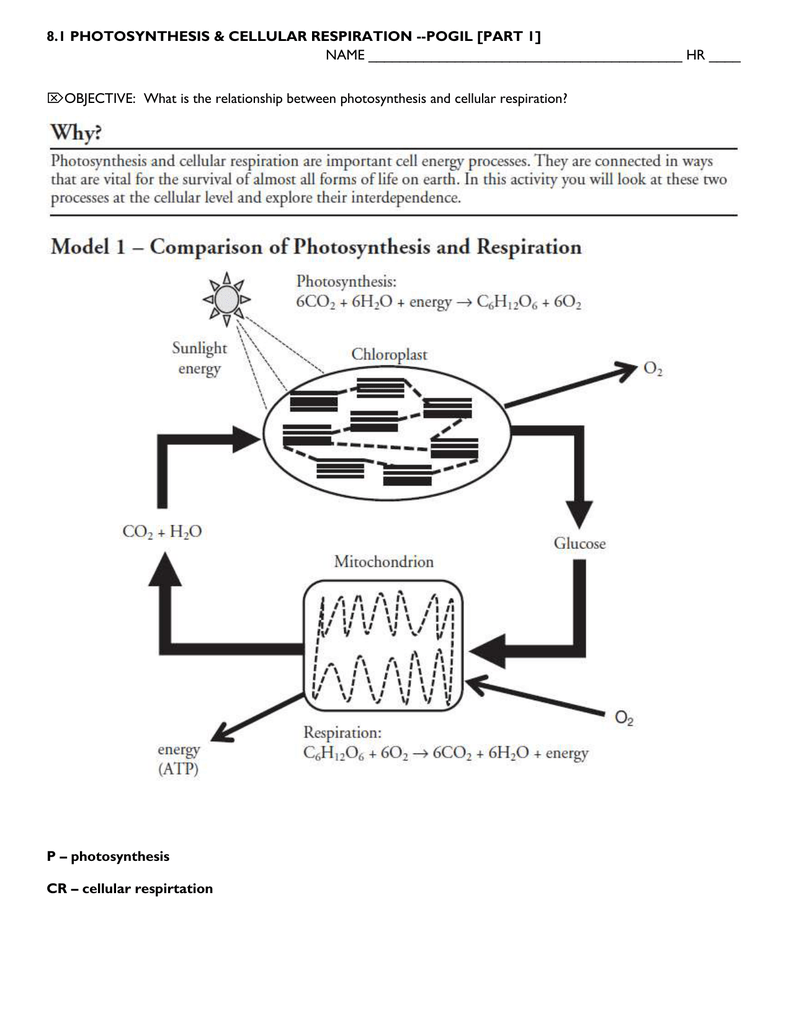 81 PHOTOSYNTHESIS CELLULAR RESPIRATION – Cellular Respiration Diagram Worksheet