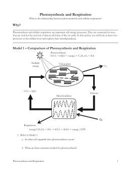 Model 1 – Comparison of Photosynthesis and Respiration